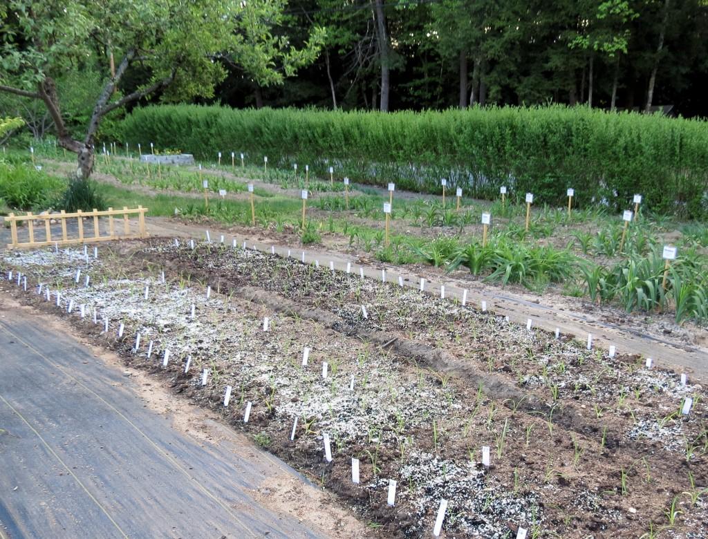 seedlings5-15065
