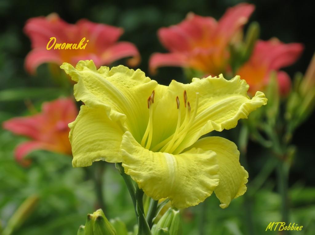 omomuki_7173